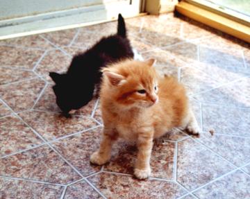 Geschwisterkatzen